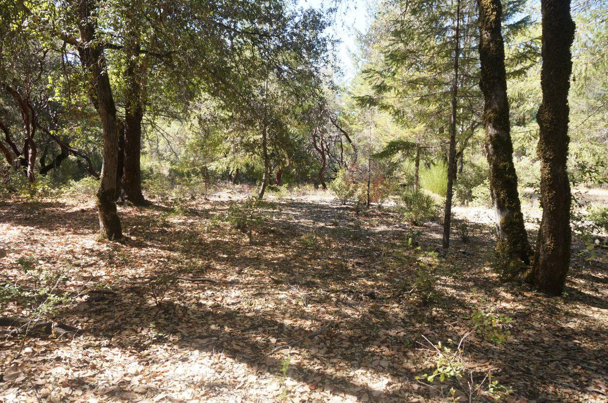 Land for Sale at 800 Suzy Q Road Burnt Ranch, California 95527 United States