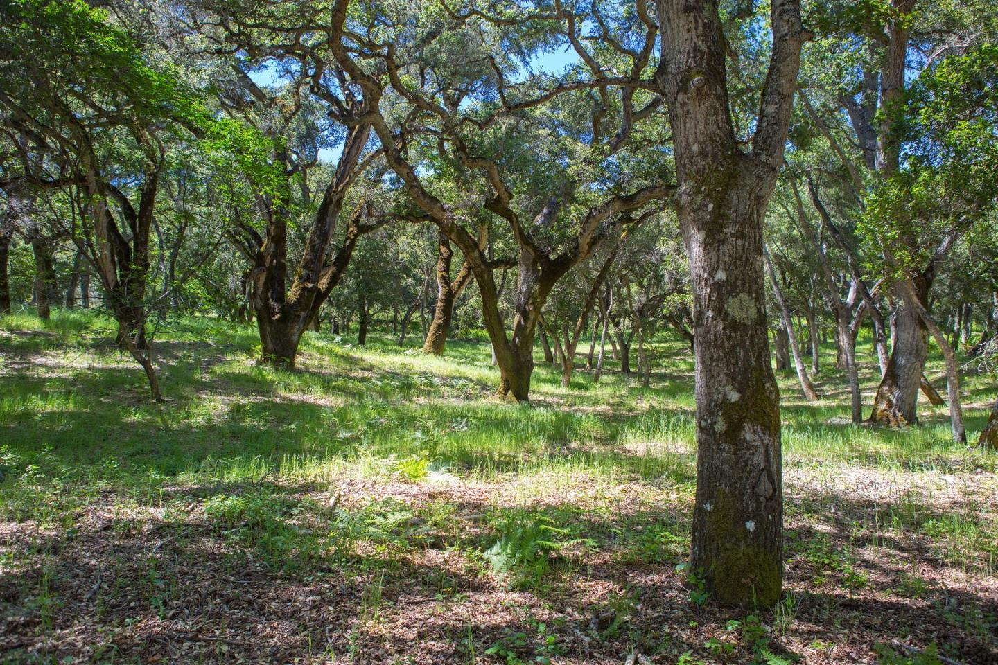 Additional photo for property listing at 9 Garzas Trail  Carmel, カリフォルニア 93923 アメリカ合衆国