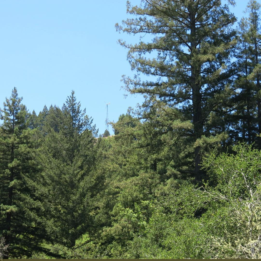 Additional photo for property listing at 200 McKenzie Creek  Scotts Valley, California 95066 United States