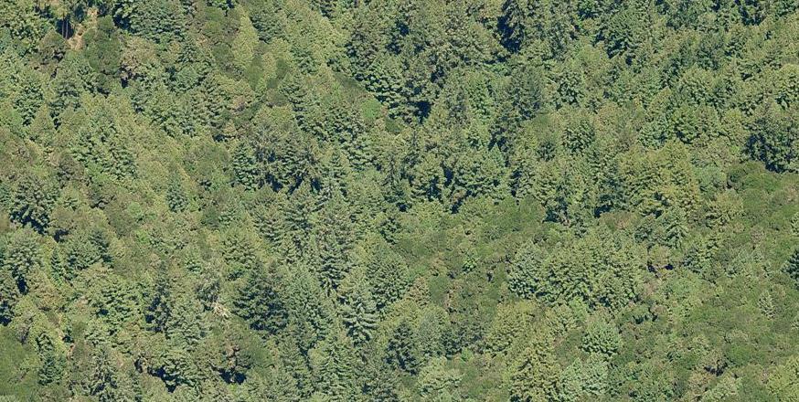 Additional photo for property listing at Bark Road Bark Road Aptos, Kalifornien 95003 Vereinigte Staaten